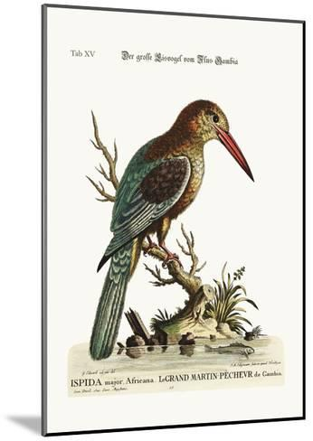 The Great Kingfisher from the River Gambia, 1749-73-George Edwards-Mounted Giclee Print