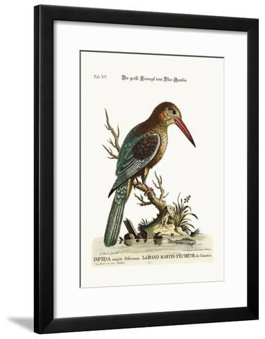 The Great Kingfisher from the River Gambia, 1749-73-George Edwards-Framed Art Print