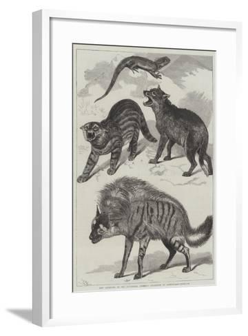 New Additions to the Zoological Society's Collection of Animals-Friedrich Wilhelm Keyl-Framed Art Print