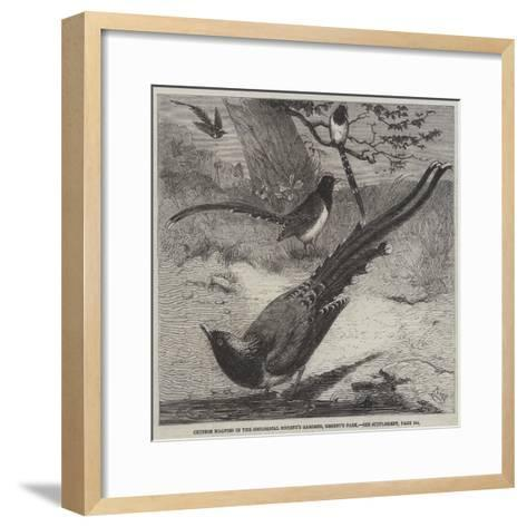 Chinese Magpies in the Zoological Society's Gardens, Regent's Park-Friedrich Wilhelm Keyl-Framed Art Print