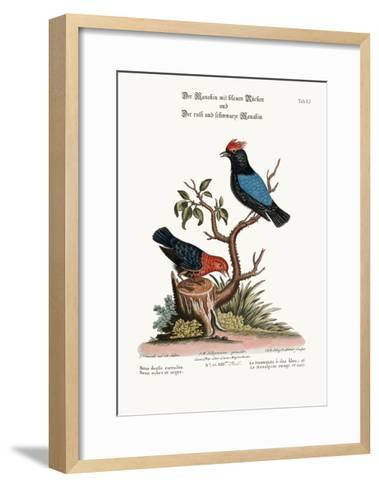 The Blue-Backed Manakin, and the Red and Black Manakin, 1749-73-George Edwards-Framed Art Print