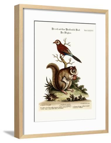 The Red and Blue Brasilian Finch. the Flying Squirrel, 1749-73-George Edwards-Framed Art Print