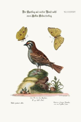 The White-Throated Sparrow, and the Yellow Butterfly, 1749-73-George Edwards-Stretched Canvas Print