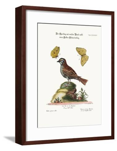 The White-Throated Sparrow, and the Yellow Butterfly, 1749-73-George Edwards-Framed Art Print