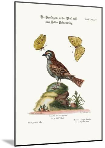 The White-Throated Sparrow, and the Yellow Butterfly, 1749-73-George Edwards-Mounted Giclee Print