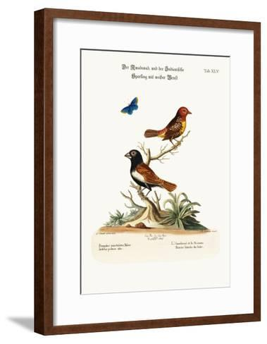 The Amadavad, and the White-Breasted Indian Sparrow, 1749-73-George Edwards-Framed Art Print