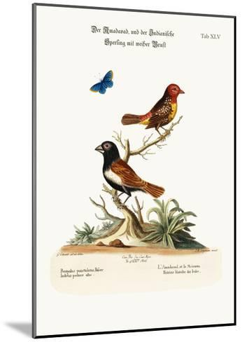 The Amadavad, and the White-Breasted Indian Sparrow, 1749-73-George Edwards-Mounted Giclee Print