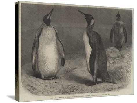The Royal Penguin in the Zoological Society's Gardens, Regent's Park-Friedrich Wilhelm Keyl-Stretched Canvas Print