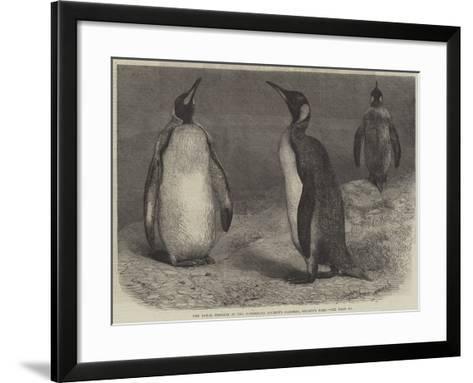 The Royal Penguin in the Zoological Society's Gardens, Regent's Park-Friedrich Wilhelm Keyl-Framed Art Print