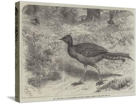 The Lyre Bird, in the Zoological Society's Gardens, Regent's Park-Friedrich Wilhelm Keyl-Stretched Canvas Print