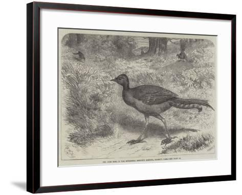 The Lyre Bird, in the Zoological Society's Gardens, Regent's Park-Friedrich Wilhelm Keyl-Framed Art Print