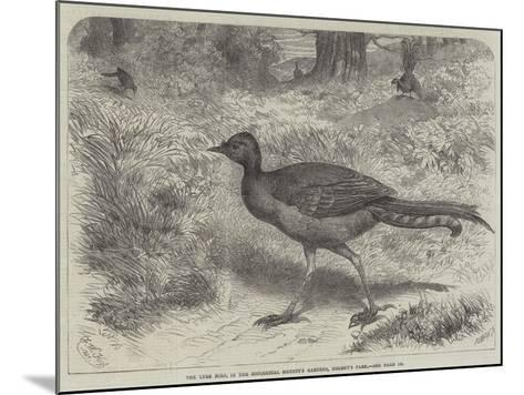 The Lyre Bird, in the Zoological Society's Gardens, Regent's Park-Friedrich Wilhelm Keyl-Mounted Giclee Print