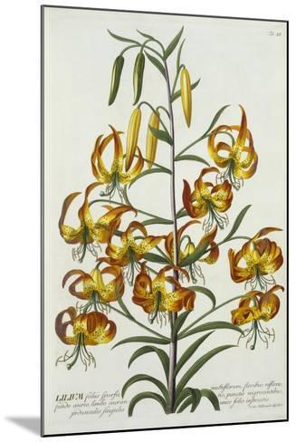 American Turkscap Lily, C.1740-Georg Dionysius Ehret-Mounted Giclee Print