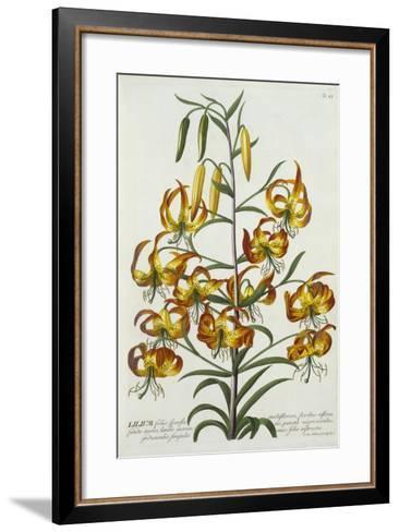 American Turkscap Lily, C.1740-Georg Dionysius Ehret-Framed Art Print