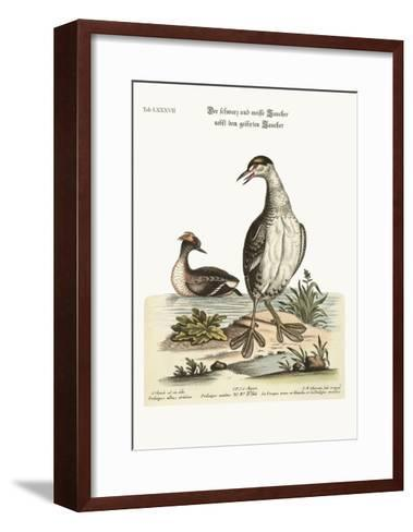 The Black and White Dobchick and the Eared Dobchick, 1749-73-George Edwards-Framed Art Print