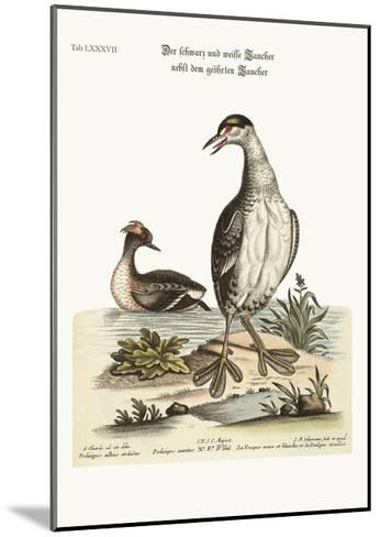 The Black and White Dobchick and the Eared Dobchick, 1749-73-George Edwards-Mounted Giclee Print