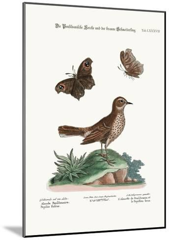 The Lark from Pensilvania, and the Brown Butterfly, 1749-73-George Edwards-Mounted Giclee Print