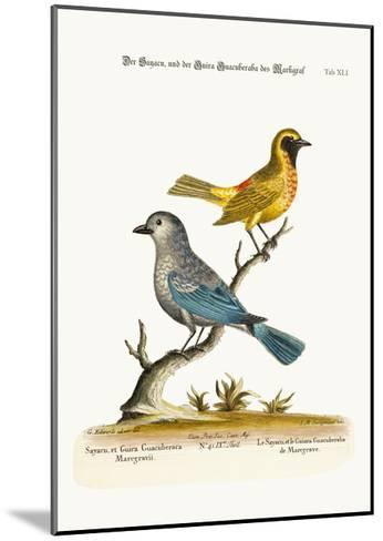 The Sayacu, and the Guira Guacuberaba of Marcgrave, 1749-73-George Edwards-Mounted Giclee Print