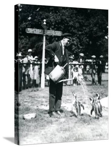 Keeper, Ernie Sceales, Gives Three Penguins a Shower from a Watering Can, London Zoo, 1919-Frederick William Bond-Stretched Canvas Print