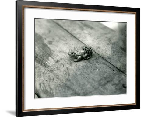 A Male Midwife Toad, Carrying Fertilised Eggs on His Back, London Zoo, September 1921-Frederick William Bond-Framed Art Print