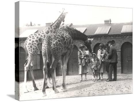Giraffes and Visitors at Zsl London Zoo, from July 1926-Frederick William Bond-Stretched Canvas Print