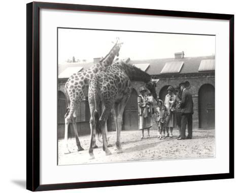Giraffes and Visitors at Zsl London Zoo, from July 1926-Frederick William Bond-Framed Art Print