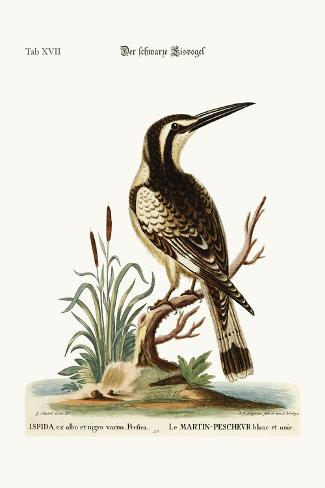 The Black and White Kingfisher, 1749-73-George Edwards-Stretched Canvas Print