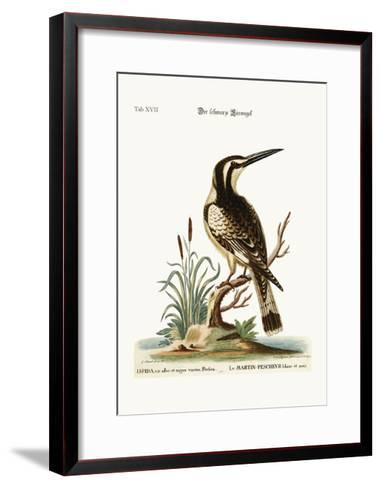 The Black and White Kingfisher, 1749-73-George Edwards-Framed Art Print