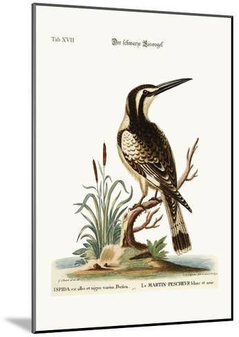 The Black and White Kingfisher, 1749-73-George Edwards-Mounted Giclee Print