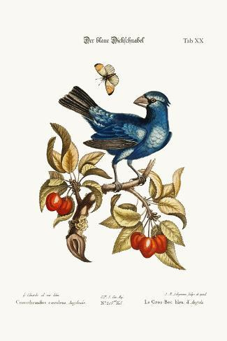 The Blue Gros-Beak from Angola, 1749-73-George Edwards-Stretched Canvas Print
