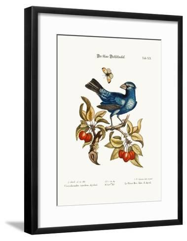 The Blue Gros-Beak from Angola, 1749-73-George Edwards-Framed Art Print
