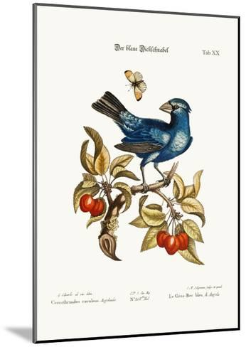The Blue Gros-Beak from Angola, 1749-73-George Edwards-Mounted Giclee Print