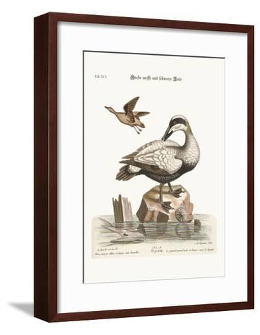 The Great Black and White Duck, 1749-73-George Edwards-Framed Art Print
