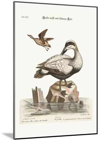 The Great Black and White Duck, 1749-73-George Edwards-Mounted Giclee Print