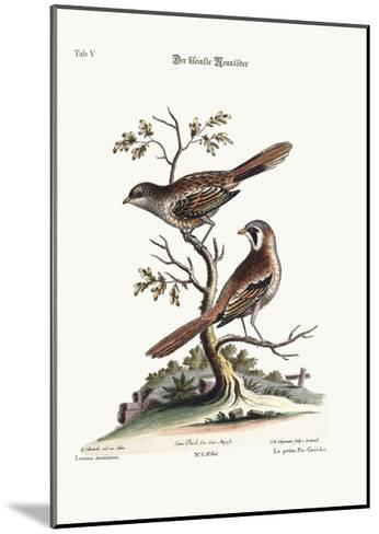 The Least Butcher-Bird, 1749-73-George Edwards-Mounted Giclee Print