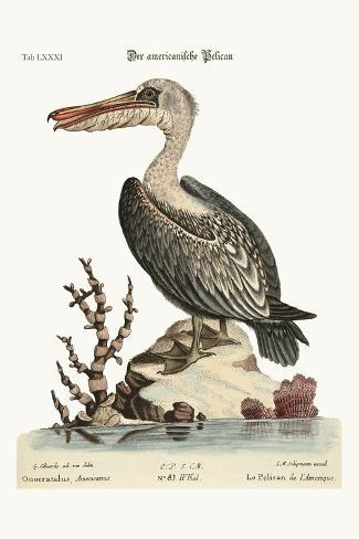 The Pelican of America, 1749-73-George Edwards-Stretched Canvas Print