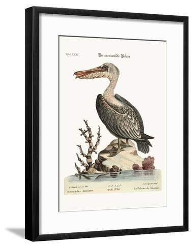 The Pelican of America, 1749-73-George Edwards-Framed Art Print