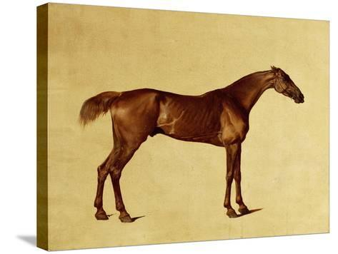 Rufus-George Stubbs-Stretched Canvas Print