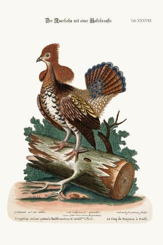The Ruffed Heath-Cock or Grous, 1749-73-George Edwards-Stretched Canvas Print