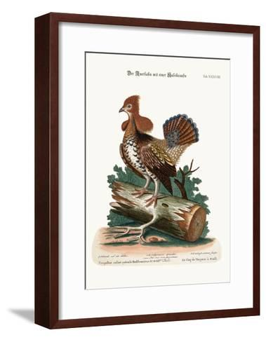 The Ruffed Heath-Cock or Grous, 1749-73-George Edwards-Framed Art Print