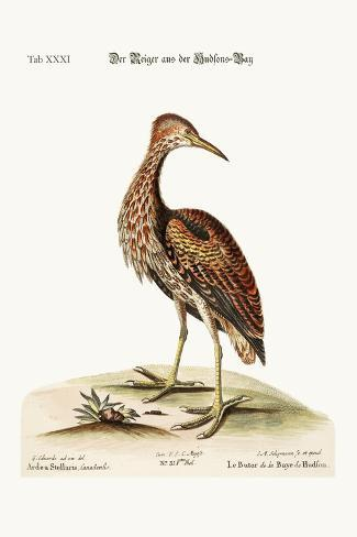 The Bittern from Hudson's Bay, 1749-73-George Edwards-Stretched Canvas Print
