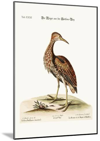 The Bittern from Hudson's Bay, 1749-73-George Edwards-Mounted Giclee Print