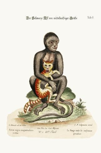 The Middle-Sized Black Monkey, 1749-73-George Edwards-Stretched Canvas Print