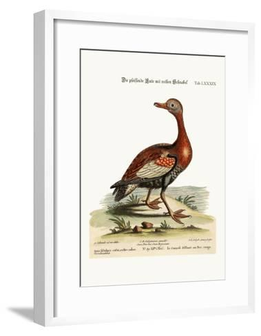The Red-Billed Whistling Duck, 1749-73-George Edwards-Framed Art Print