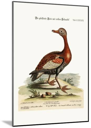 The Red-Billed Whistling Duck, 1749-73-George Edwards-Mounted Giclee Print
