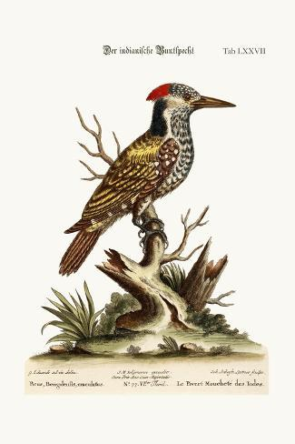 The Spotted Indian Woodpecker, 1749-73-George Edwards-Stretched Canvas Print