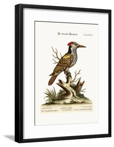 The Spotted Indian Woodpecker, 1749-73-George Edwards-Framed Art Print