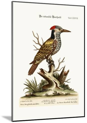 The Spotted Indian Woodpecker, 1749-73-George Edwards-Mounted Giclee Print
