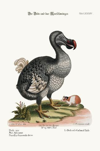 The Dodo, and the Guiney Pig, 1749-73-George Edwards-Stretched Canvas Print