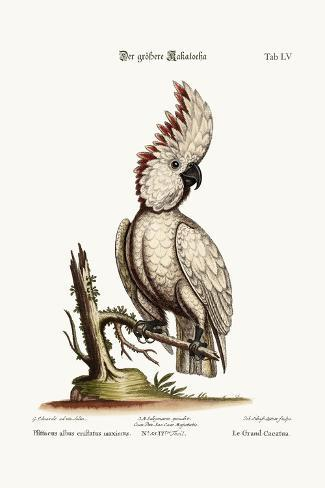 The Greater Cockatoo, 1749-73-George Edwards-Stretched Canvas Print